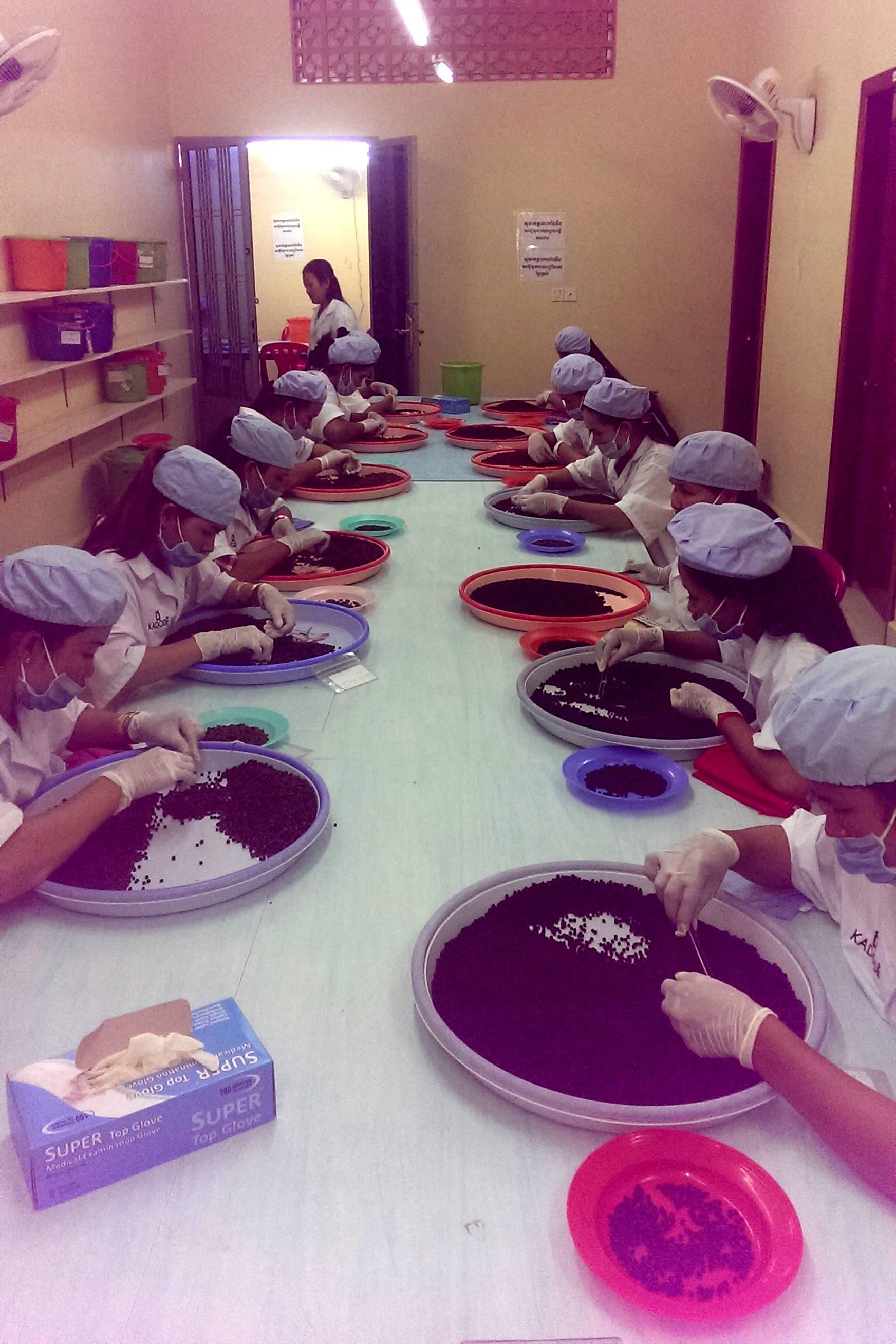 Fabrique de poivre de Kampot au Cambodge 1