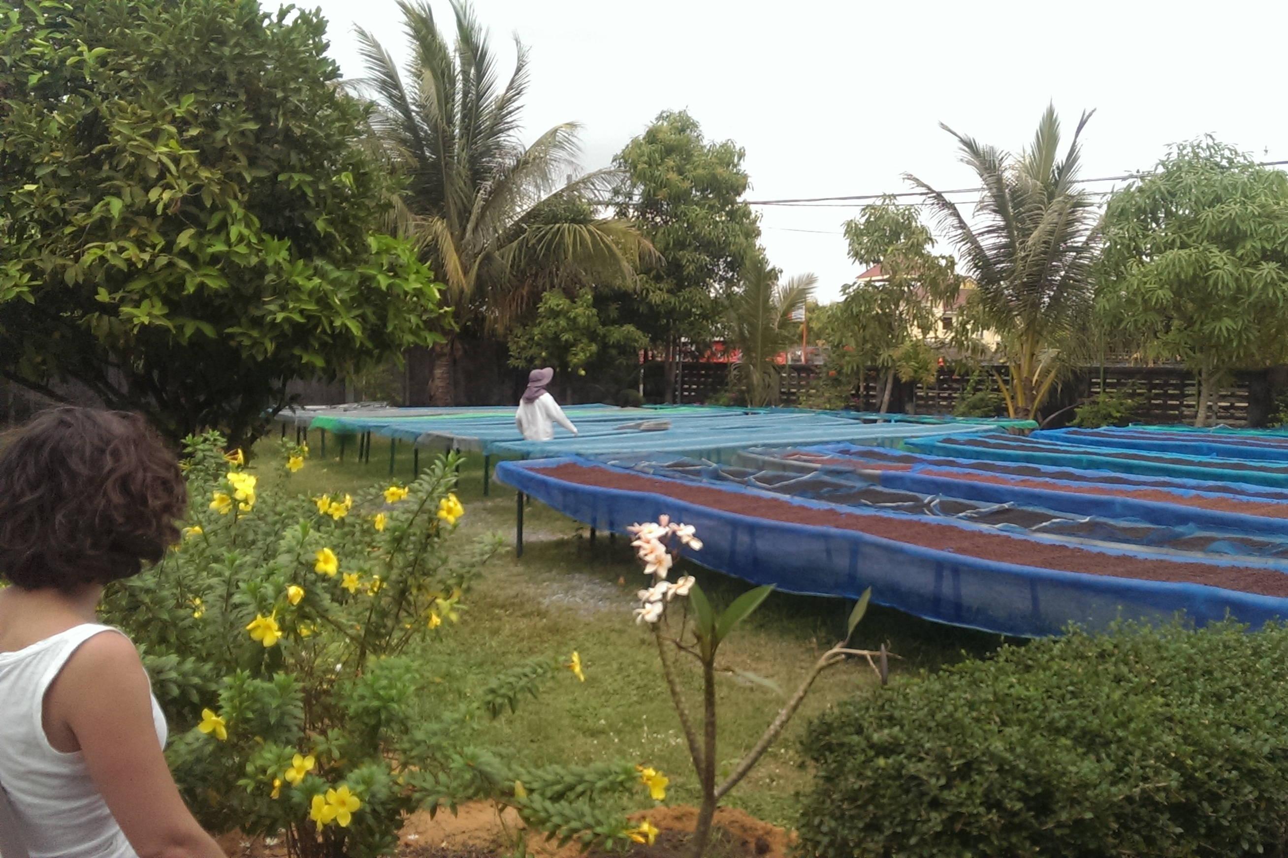 Fabrique de poivre de Kampot au Cambodge 2