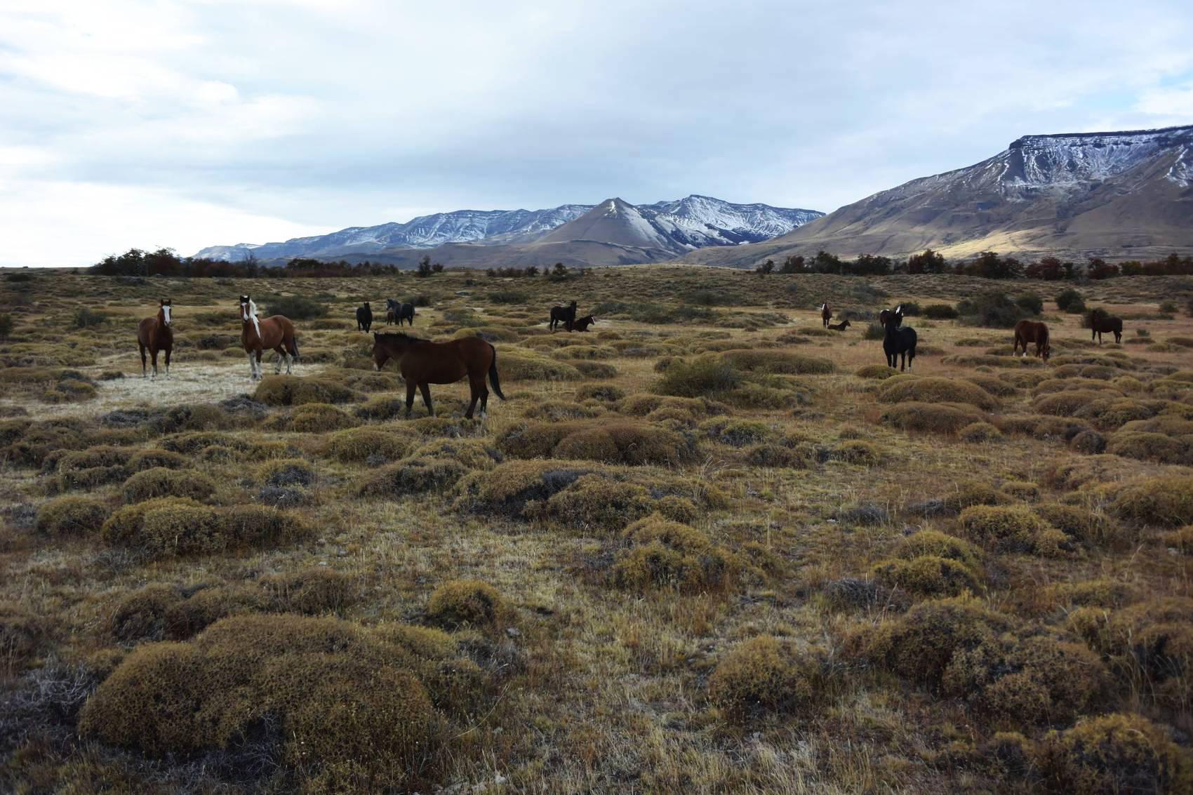 Cavalcade en Patagonie