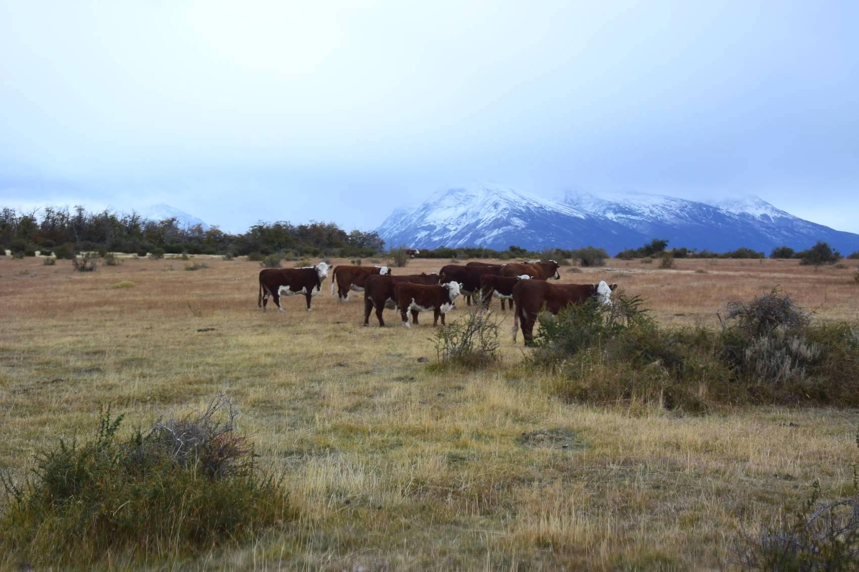 Cavalcade en Patagonie 3