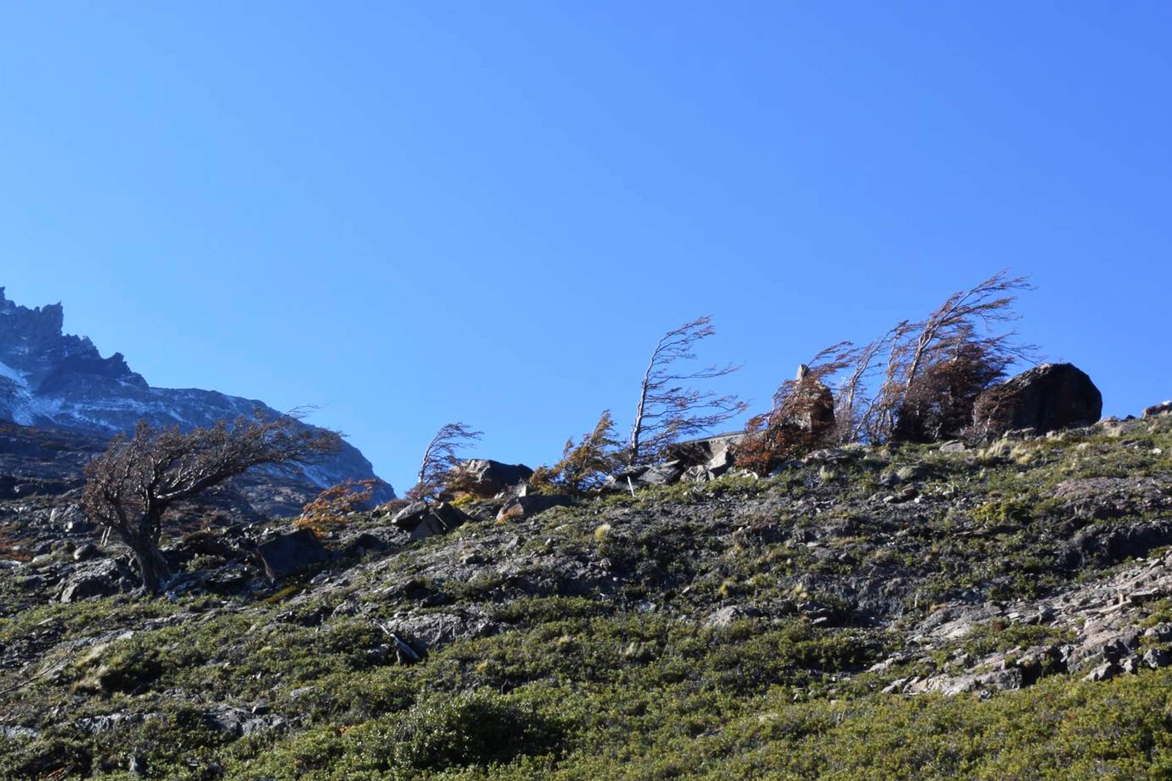 Torres del Paine 22