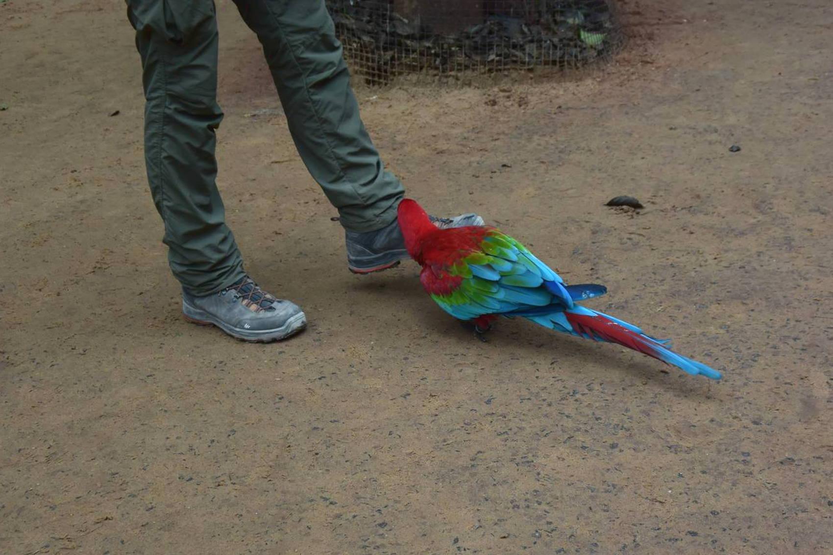 Parc au oiseau 7