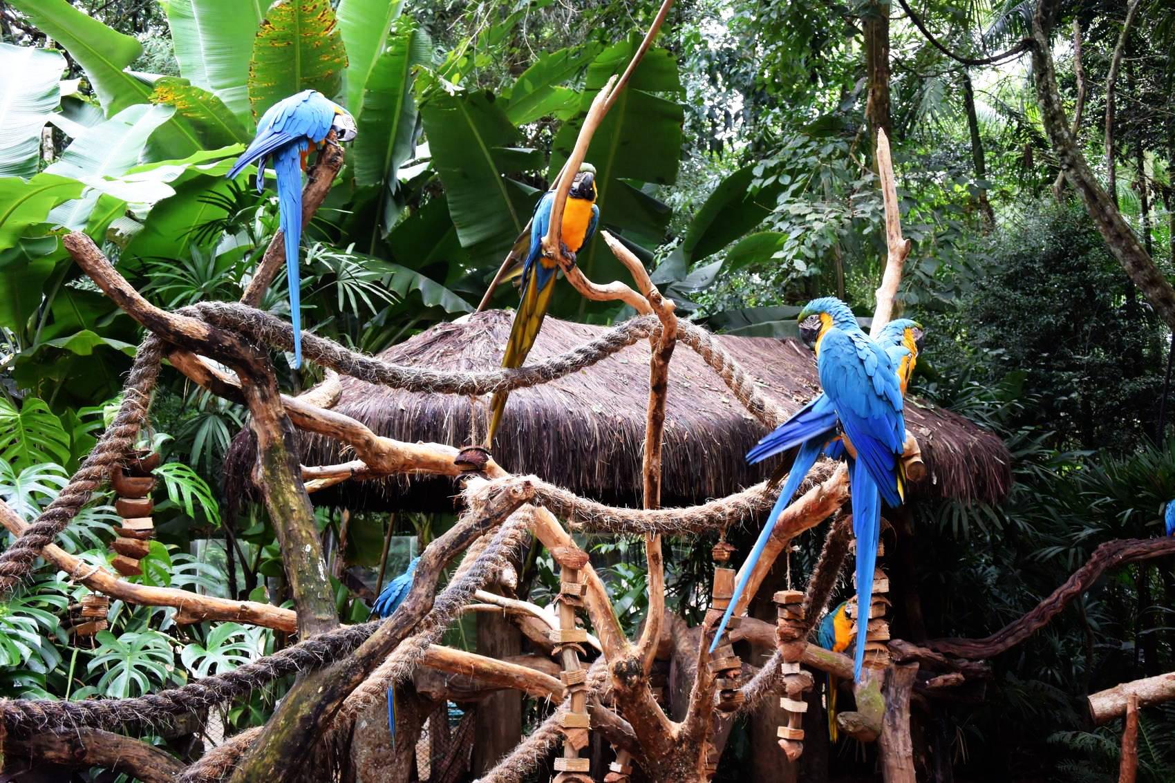 Parc au oiseau 9